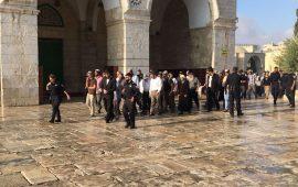 50 مستوطنًا يقتحمون المسجد الأقصى