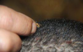 العلاج بلسعات النحل… طب بديل في غزة