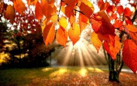الخريف يبدأ الأحد ويستمر 89 يومًا