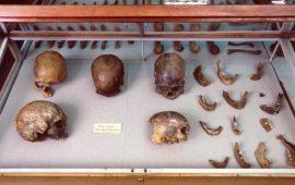 3 دراسات للحمض النووي تكشف حقائق عن تاريخ البشر بأمريكا