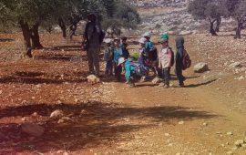 مستوطنون يعتدون على قاطفي الزيتون قرب نابلس