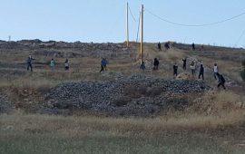 مستوطنون يستبيحون محاصيل المواطنين في الأغوار