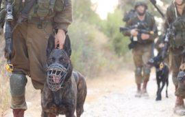 مركز إسرائيلي لحقوق الانسان: الجيش استخدم القوة المميتة بغزة دون مبرر