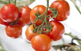 3.5 مليون طن صادرات تركيا من الفواكه والخضراوات