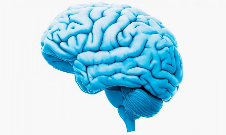 14 حقيقة يجهلها الكثيرون عن الدماغ البشري