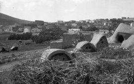 قرية الشجرة..  قاومت ببسالة قبل أن تحتلها العصابات الصهيونية