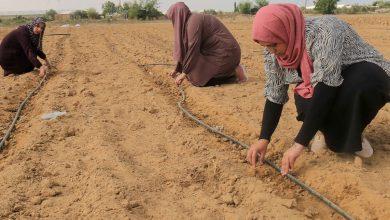 Photo of 3 فلسطينيات يتغلبن على البطالة باستئجار أرض وزراعتها في غزة