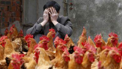 Photo of أول إصابات بشرية في العالم.. روسيا تعلن تسجيل إصابة 7 عمال بإنفلونزا الطيور