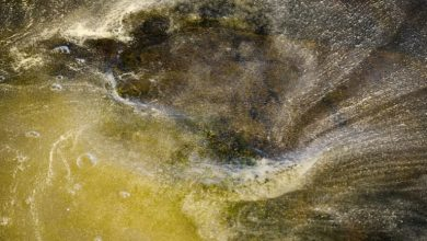 Photo of تحذيرات من موسم حساسية مبكر وأطول من المعتاد
