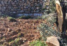 """Photo of مستوطنو """"أفيتار"""" يشعلون النار في عشرات أشجار الزيتون على جبل صبيح"""